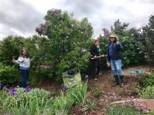 Three Colorado Master Gardeners maintain a purple garden.
